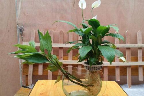 植物科普 植物对水的利用原理