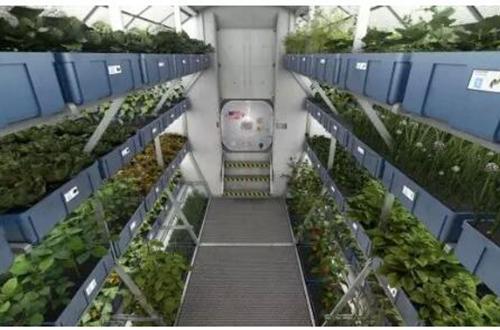 植物科普 太空种植有多难?