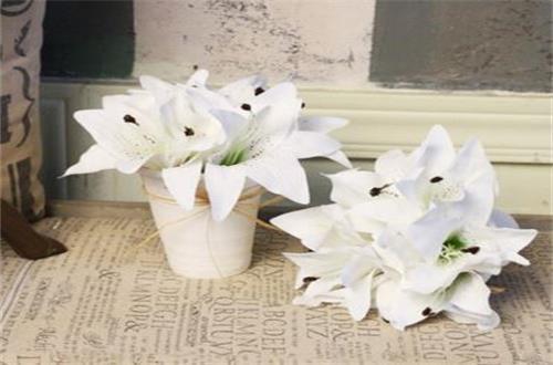 买来的百合花怎么养,5个小妙招养殖百合花