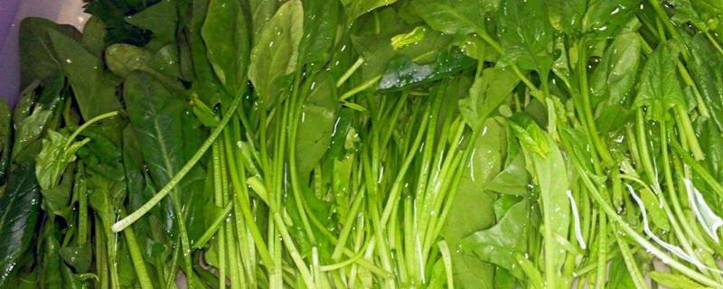 含硒的蔬菜有哪几种