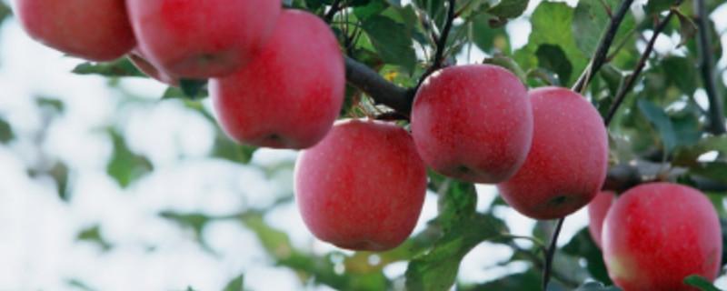 五月种什么水果