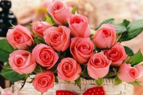 玫瑰花有哪些颜色,11种玫瑰花颜色代表的含义