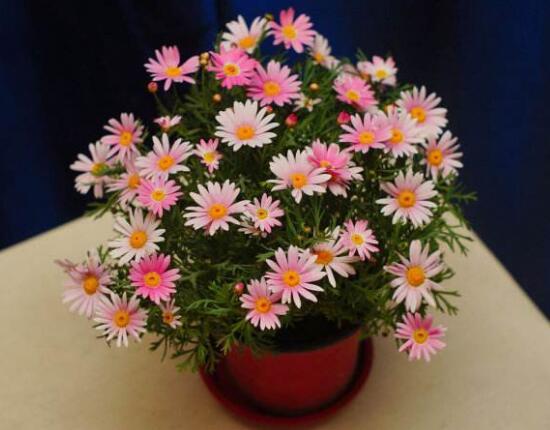 盘点十种招鬼的花,家里有这些花赶紧扔掉(易招鬼怪)