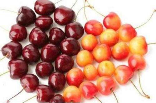 车厘子和樱桃一样吗,车厘子跟樱桃的区别(4种)