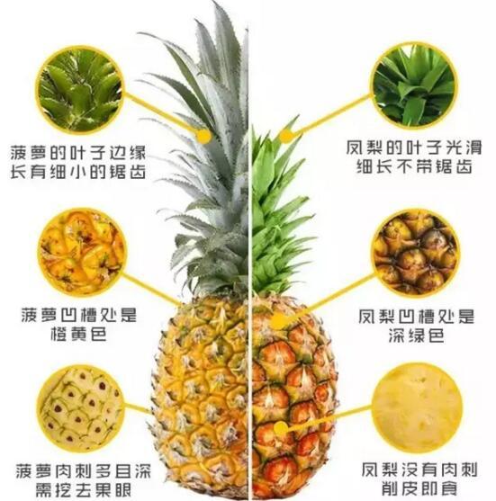 菠蘿和鳳梨的區別,六個方面教你如何區分