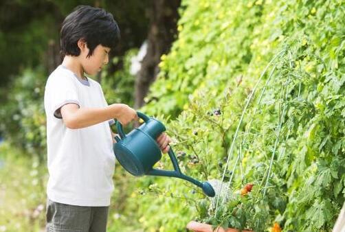 淘米水能直接浇花吗,黑淘米水能不能浇花(发酵后才能浇)