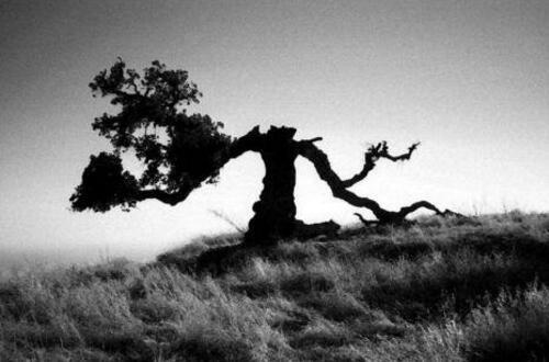 盘点民间五种招鬼的树,桑树/柳树/槐树/杨树/楝树