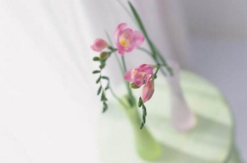 高的花瓶适合养what花,最适合大气高贵有逼格的花