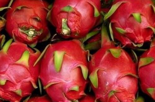 火龙果是热性还是凉性,凉性水果具有排毒解毒作用