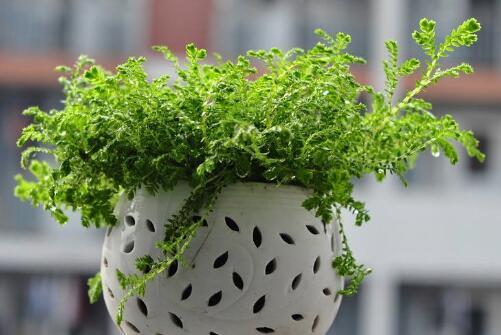 卧室放什么植物最好