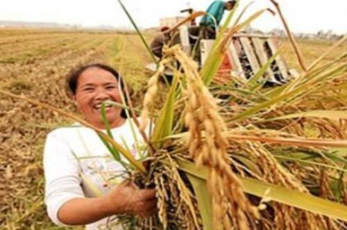 农村种什么赚钱,这十种植物养殖简单前景好