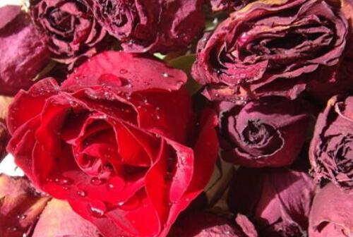 新鲜玫瑰花怎么做干花,详细介绍2种干花制造方法
