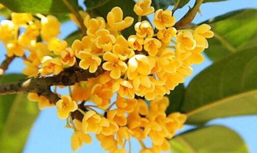 秋天开花的植物有哪些,盘点十种秋季开花的花卉