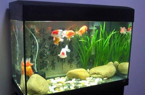 养鱼水浇花好吗,家庭鱼缸水不能浇花(鱼塘水可用)
