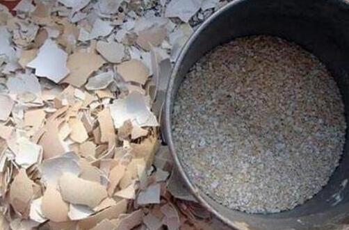 7天简易自制有机肥料,盘点10种最有效最简单的自制肥