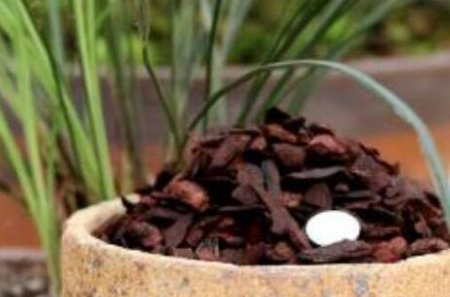怎样判断松树皮腐熟了,从颜色气味和手感三者辨别