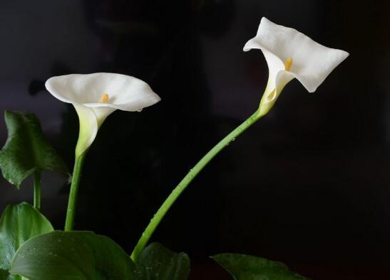 春季开花的植物有哪些,十大常见的春季开花绿植