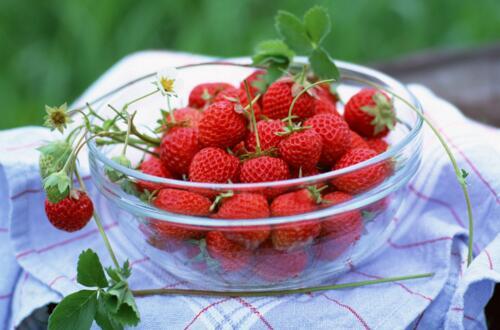 草莓长藤怎么处理,可繁殖成新植株或直接剪掉