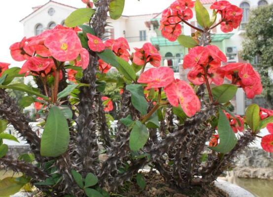 常年开花的花卉有哪些,盘点10种四季