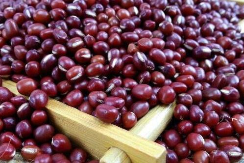 相思红豆的花语寓意,浓浓的相思/可作定情信物
