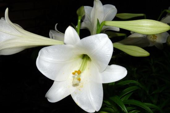 世界上什么花第一漂亮,盘点十大最美丽的花朵
