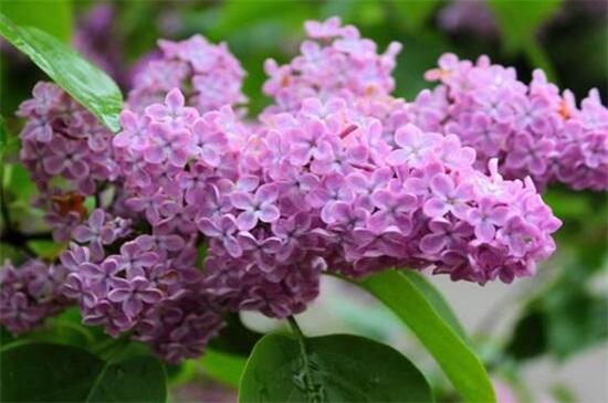 什么盆栽适合送给暗恋的人,10种最适合暗恋者告白的植物