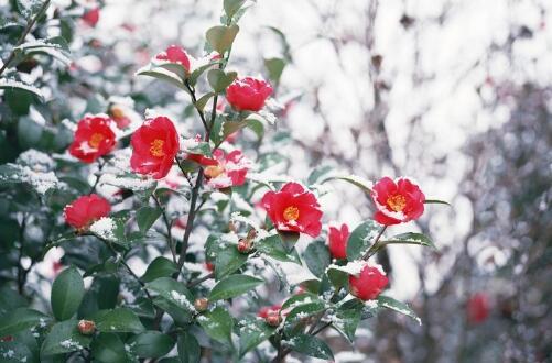 冬天冻不死的常绿植物,盘点十大常绿的耐寒植物