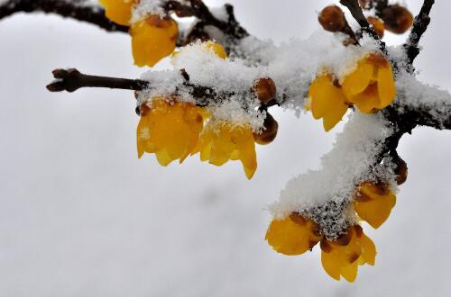 冬天的花有哪些花开,盘点十种在冬天开花的花卉
