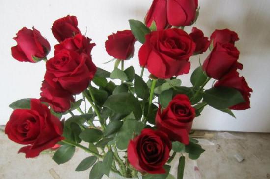 33朵玫瑰一般要多少钱,花朵加包装一起200~500元不等