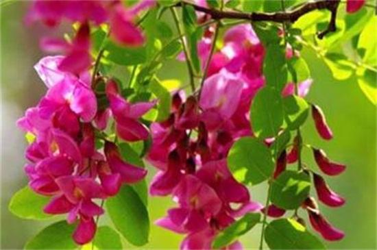 新葡京娱乐世界上最妖娆最毒的花,盘点