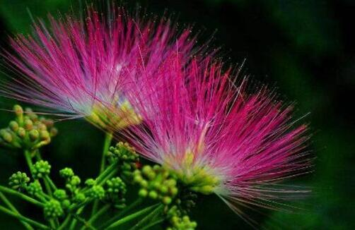 罕见好听的花名及花语,盘点十种绝美名字的花儿
