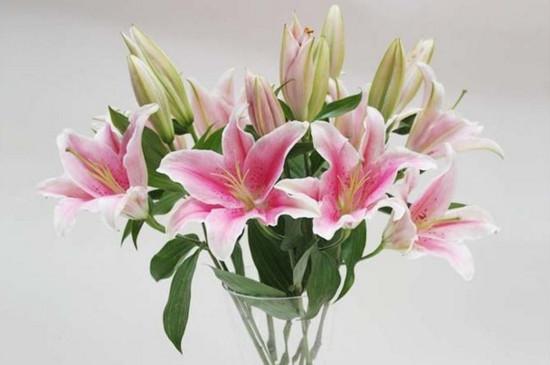 鲜花百合花怎么养水里,3步插花/5个要点让花开更持久