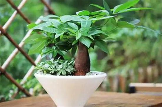 室内适合养的18种植物,这些植物养在家里不愁空气不好