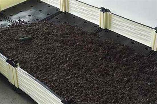 空心菜能插活吗,空心菜扦插的快速种植方法