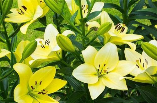 情人节送闺蜜什么花,盘点10种送闺蜜最适合花卉