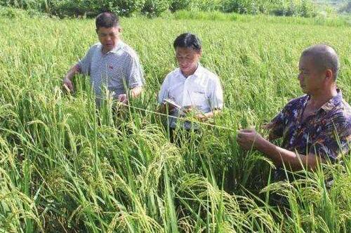 土地种植什么比较赚钱,盘点十种最赚钱的农作物