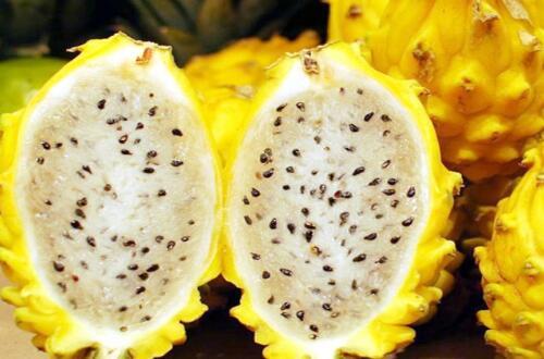 目前最好的火龙果品种,黄皮火龙果营养丰富(60元一个)