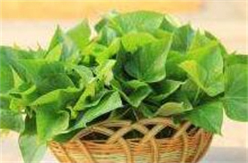 地瓜叶的好处与坏处,可舒肠通便/肾病患者禁吃
