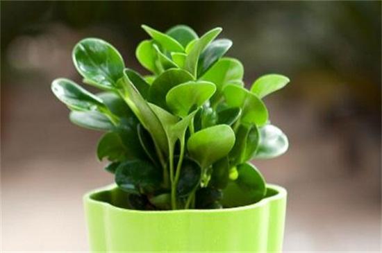 真人娱乐可扦插繁殖的植物