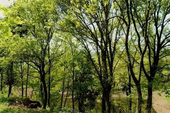 光彩夺目的什么_春天树林子的衣裳是什么颜色,淡黄色/(不同季节树林子的颜色)