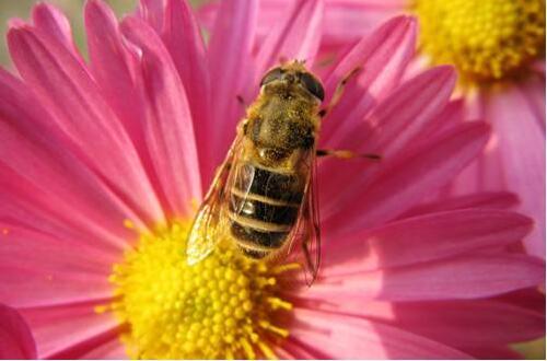 常见的益虫有哪些,盘点十大最常见到的益虫