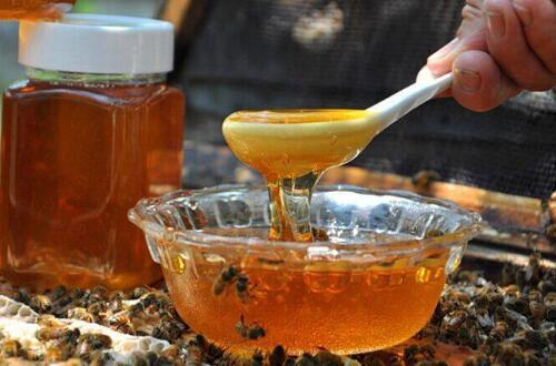 详细了解2018养蜂新政策,5个要点加强扶植养蜂行业