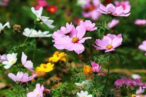 代表勇气和坚强的植物,盘点十种顽强生长的花朵