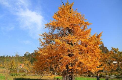 有寓意的树的名字大全,盘点十种有着超好寓意的植株