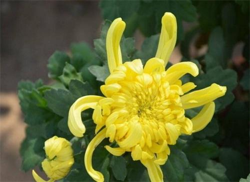 秋天的植物有哪些,盤點10種秋天最美植物