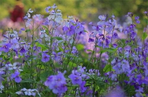 二月什么花开,盘点10种二月开花最美的植物