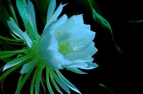 八月开什么花,盘点10种八月最常见的花
