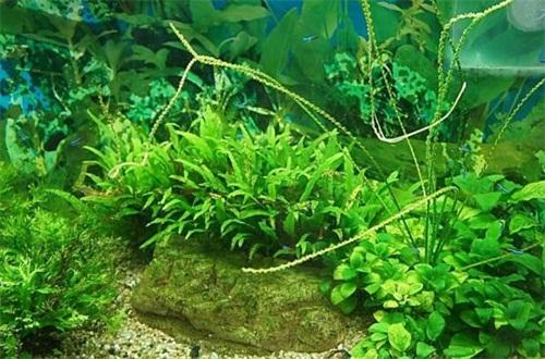 水草怎么养,六个步骤养出美丽水草