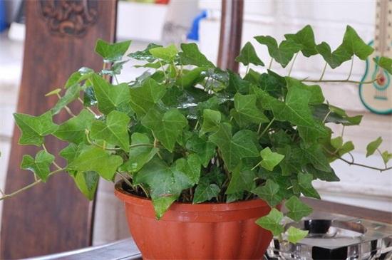 真人平台阳台上适合种什么植物