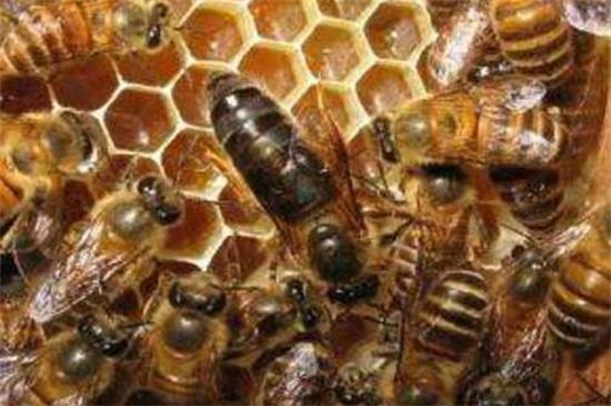 引诱蜜蜂最快的方法,5种快速招引蜜蜂的小妙招